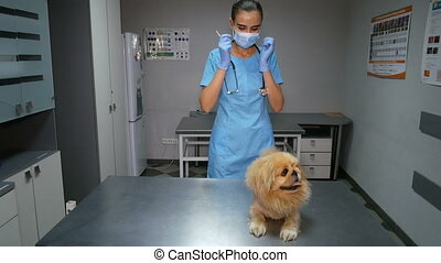 Young doctor prepares an injection for dog