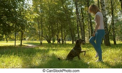Young dog handler training a dog in a park