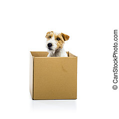 Young dog inside a cardboard box isolated
