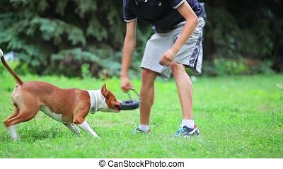 Young dog pit bull terrier - Man with her dog playing...