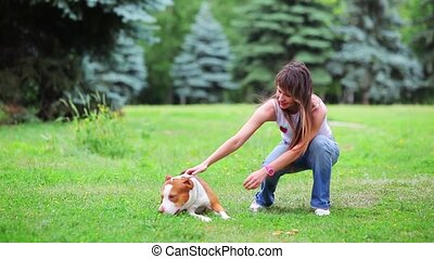 Young dog pit bull terrier - Woman with her beautiful dog...
