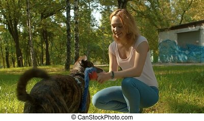 Young dog's trainer in the park with a dog