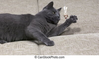 Young domestic cat playing with mouse toy on a string