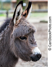young donkey looks to the right