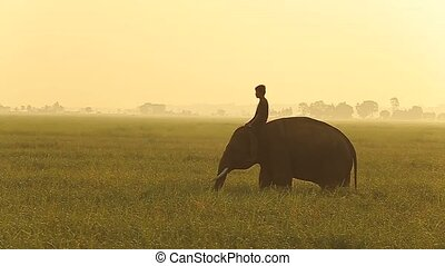 young elephant with mahout