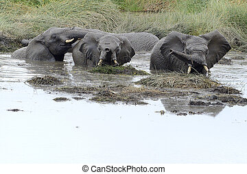 Young elephants playing in a water pool.