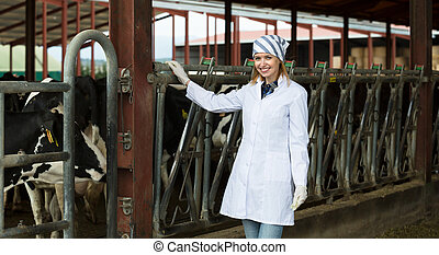 worker taking care of dairy herd - Young european worker ...