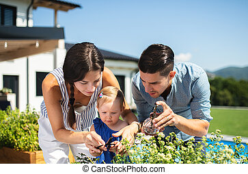 Young family with small daughter outdoors in backyard garden, spraying plants.