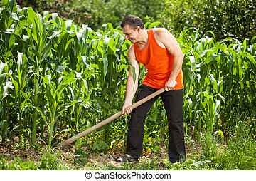 Young farmer weeding in a corn field