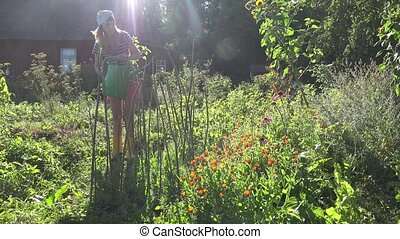 Young farmer woman girl in shorts and headscarf water peas plants with watering can.
