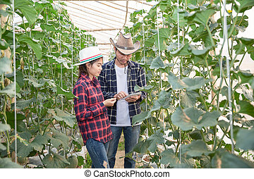 Young farmers are analyzing the growth of melon effects on greenhouse farms, Agronomist Using a Tablet in an Agriculture Field