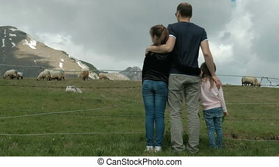 Young father with daughters looks at grazing sheep on farm outdoors.