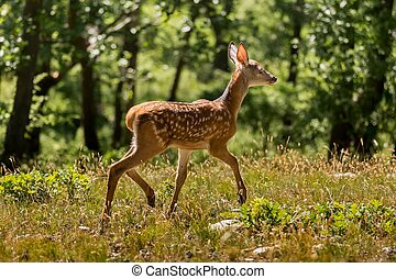 Young fawn on the forest