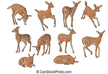 Young fawns in different poses - 3d render