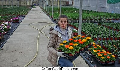 Young female gardener holding crate with gerbera in pots in greenhouse. High quality FullHD footage