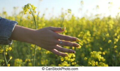 Young female hand touching the blossoming rapeseed flowers...