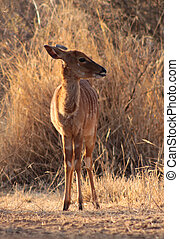 Young Female Njala Standing in Winter Sunset Sun