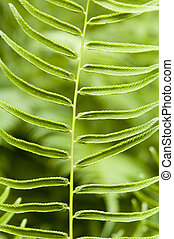 young fern background