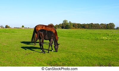 young foal is and mother horse during sunny day
