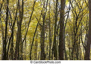 beautiful real nature before leaf fall