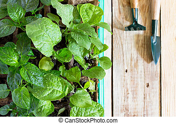 Young fresh seedling stands in container and garden tools on a wooden table. Growing seedlings in the greenhouse. Top view.