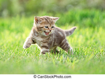 Young funny cat meowing in nature
