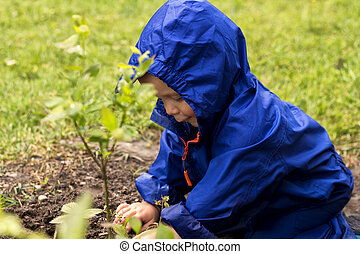Young gardener siiting on backyard and playing with a plants. Cute baby boy in a blue raincoat sitting on the grass.