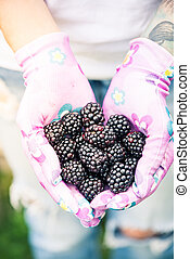 Young gardener woman holding blackberries in hands in garden