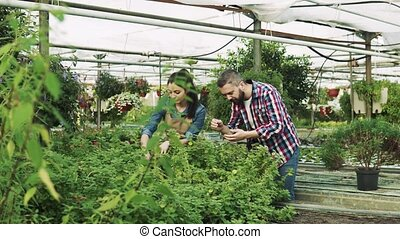 Young gardeners in a large greenhouse. - Young gardeners in...