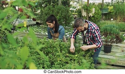 Young gardeners working in a large greenhouse. - Young...