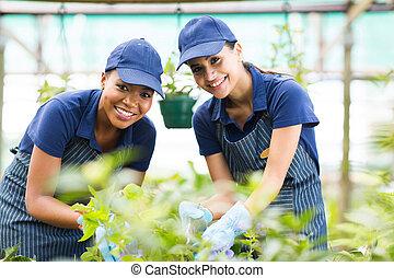 young gardeners working inside greenhouse - beautiful young...