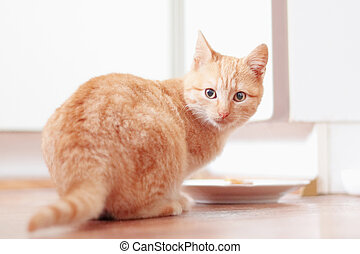 young ginger cat with bowl of food