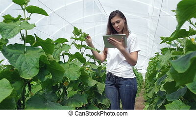 Young girl agronomist inspects leaves and comparing the on the tablet