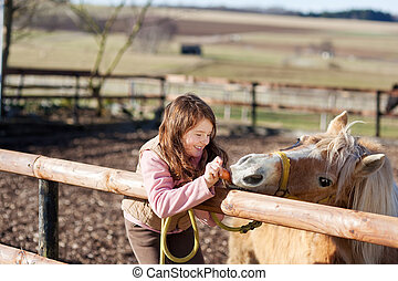 Young girl feeding carrots to a horse - Young girl on a...