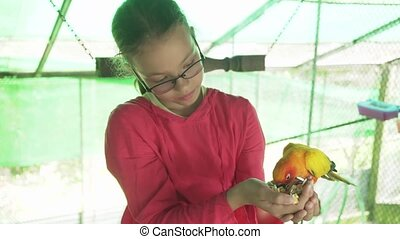 Young girl feeds parrots Lovebird stock footage video -...