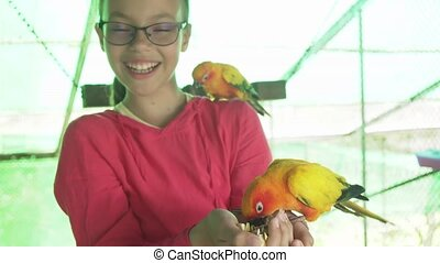 Young girl feeds parrots Lovebird - Young girl feeds a...