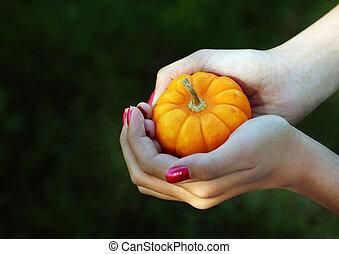 ripe baby pumpkin