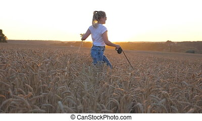 Young girl holding wheat stalks in hand and jogging with her siberian husky on leash through golden meadow. Happy woman running with dog at cereal field on sunset. Sunlight at background. Slow motion