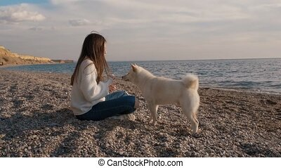 Young girl in a white sweater trains her fluffy shiba inu...