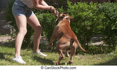 Young girl playing with her american staffordshire terrier dog outside