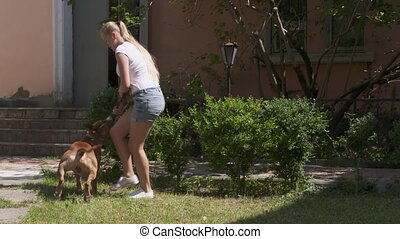 Young girl playing with her american staffordshire terrier dog