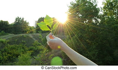 young girl stretches in hand green leaf to the Sun