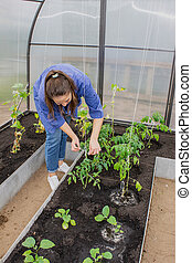young girl working in the greenhouse with cucumbers and tomatoes