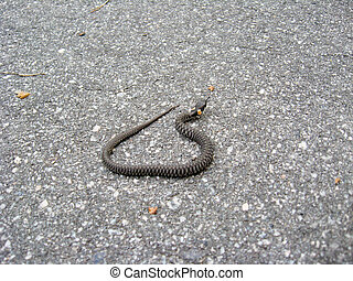 Young grass-snake on the road