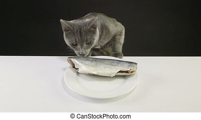 Young gray cat climbs on the table and steal raw fish from the plate