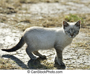 Young Gray Cat