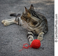 young gray kitten playing with a red woolen ball