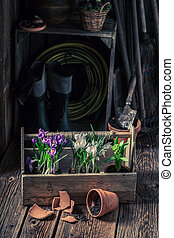Young green flowers in the rustic cottage