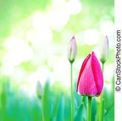 young green grass and pink tulips