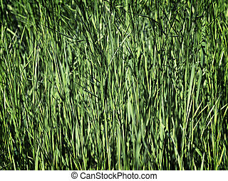young green grass as a background